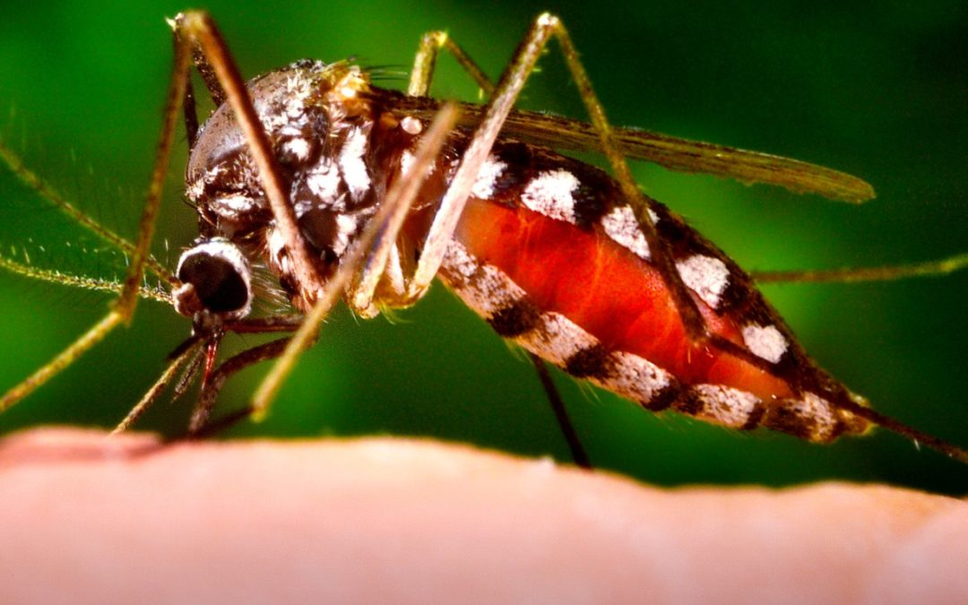 500 Million Genetically Altered Mosquitoes Let Loose in Florida and Not Everyone is Happy